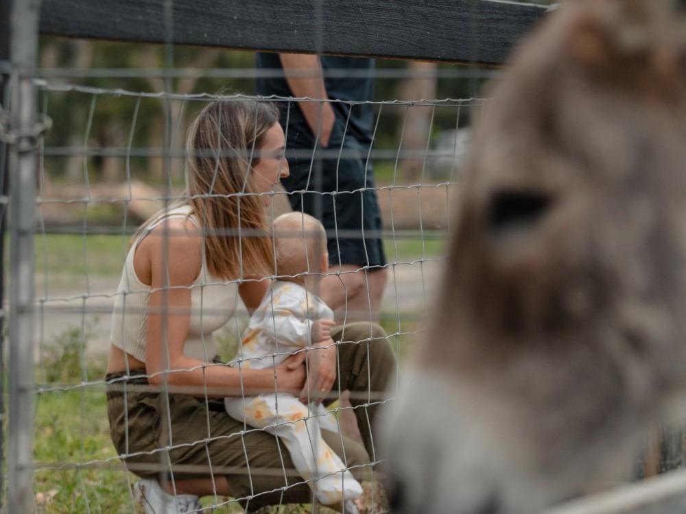 Feeding the donkey
